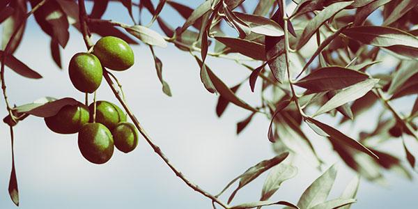 foire-olivier-montegrosso